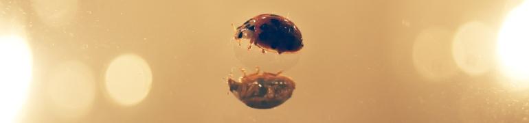 lady bug mirror