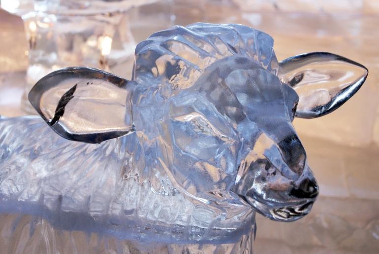 ice lamb