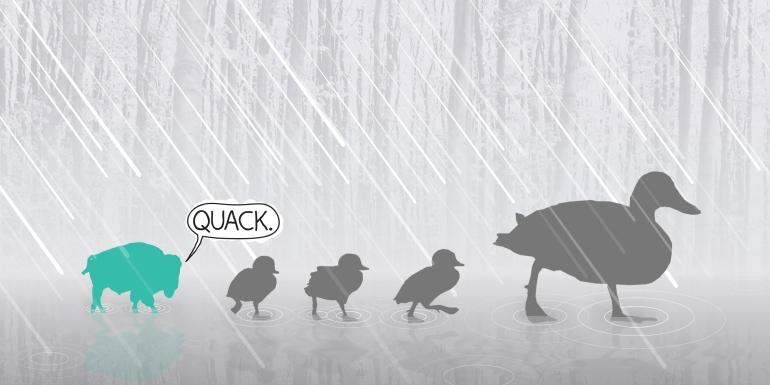 buff that quacks
