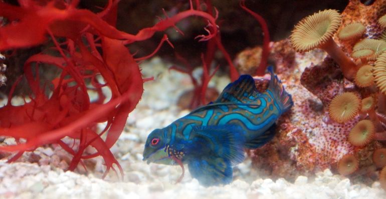 toxic tie-dye fish