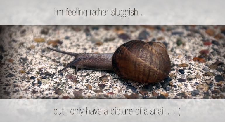 sluggish snail
