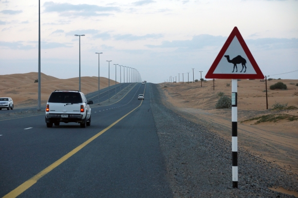 Dubai Camel Crossing