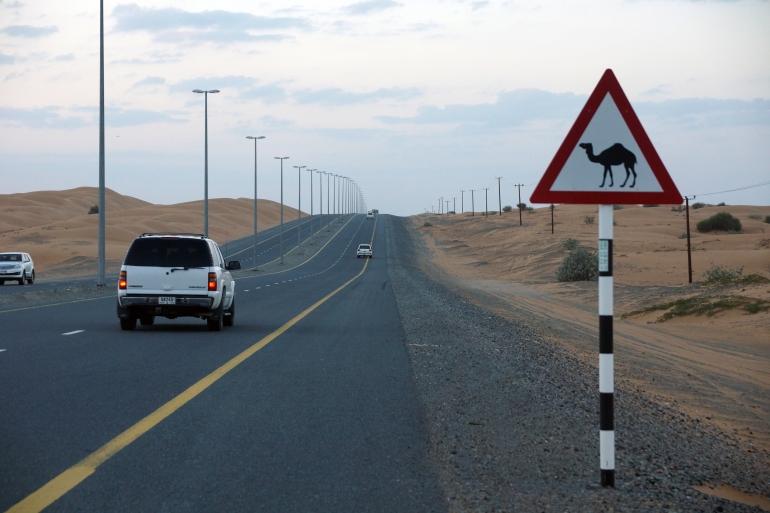 Dubai Camel Crossing