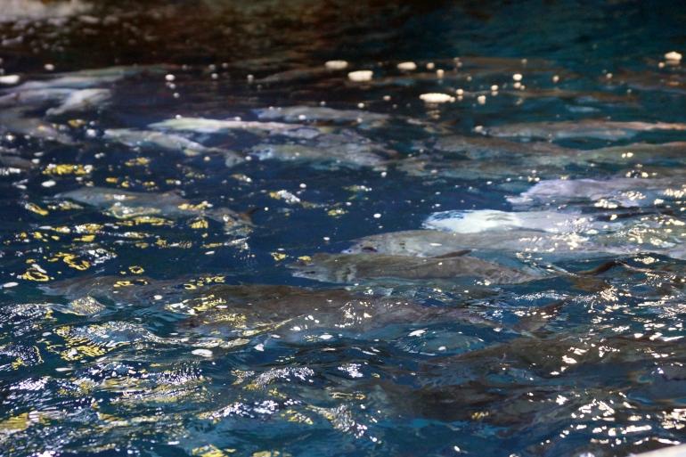 Aquarium Texture UAE