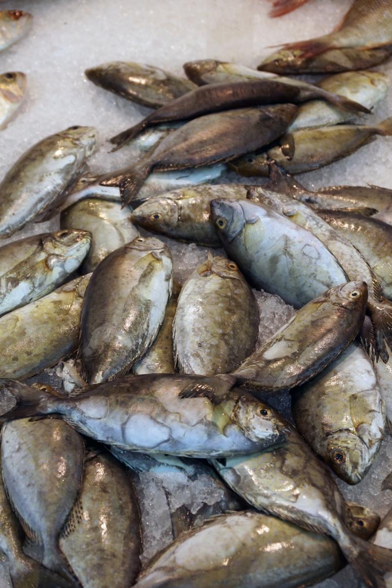 Fish Texture UAE