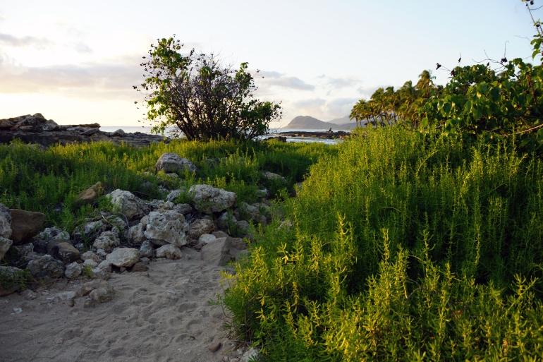 Hawaiian Vacation_Beach Greens