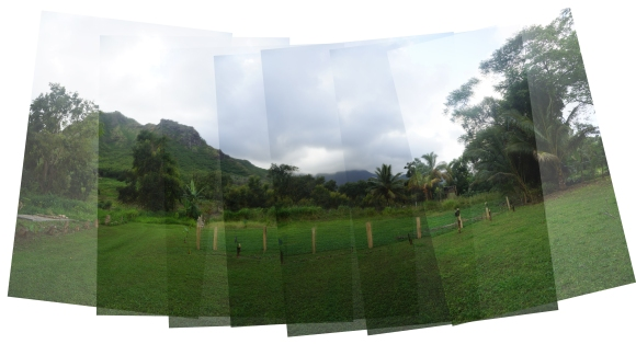 Hawaiian Vacation_Combined forest view_small