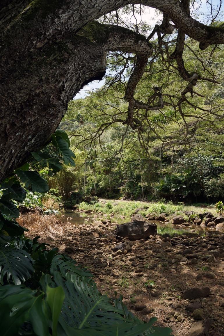 Hawaiian Vacation_Crazy Trees (2)