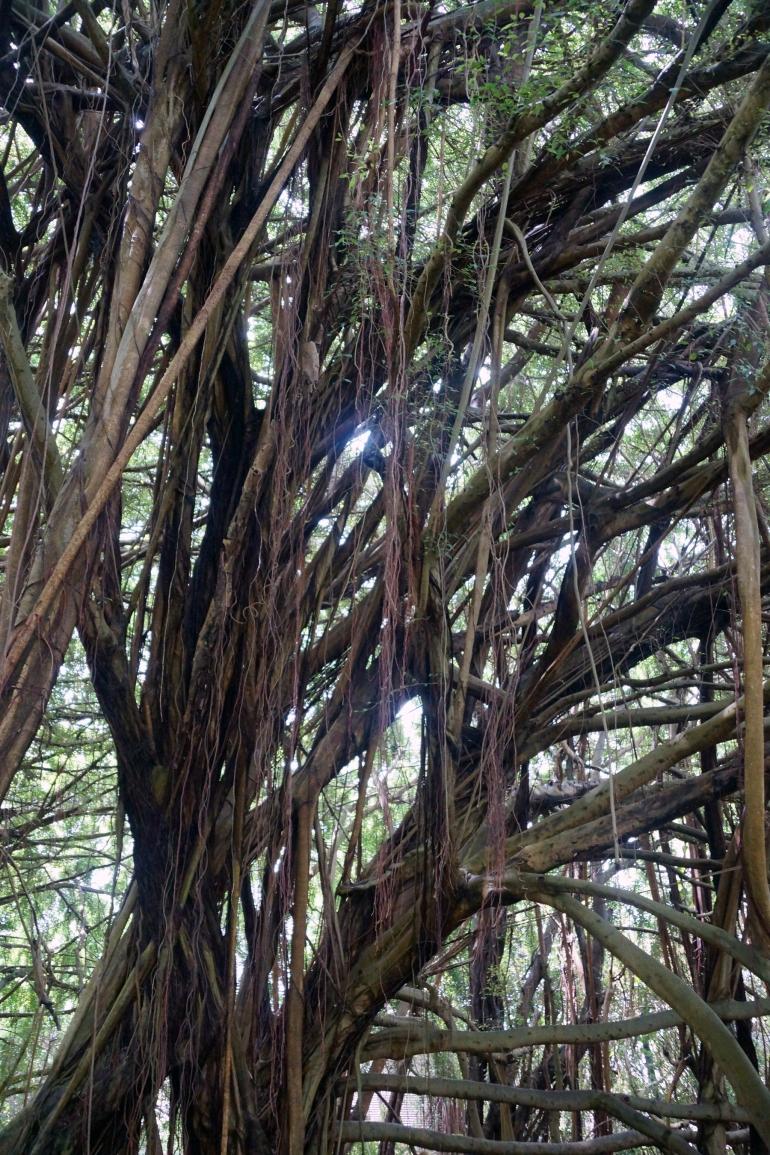 Hawaiian Vacation_Crazy Trees