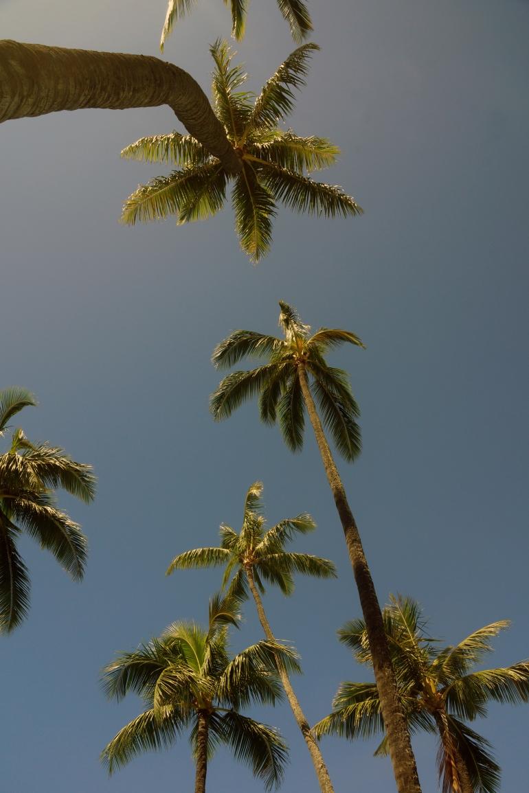 Hawaiian Vacation_Doris Duke Palm Trees