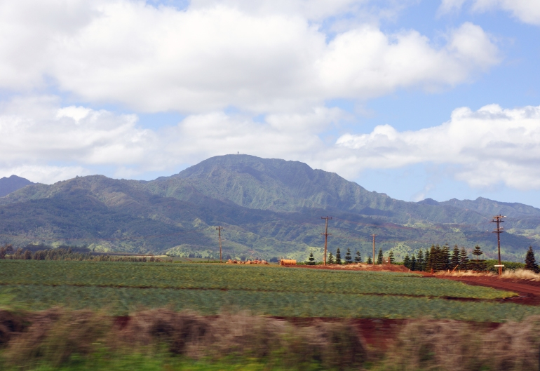 Hawaiian Vacation_Farmland