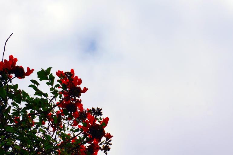Hawaiian Vacation_Flower tree 2