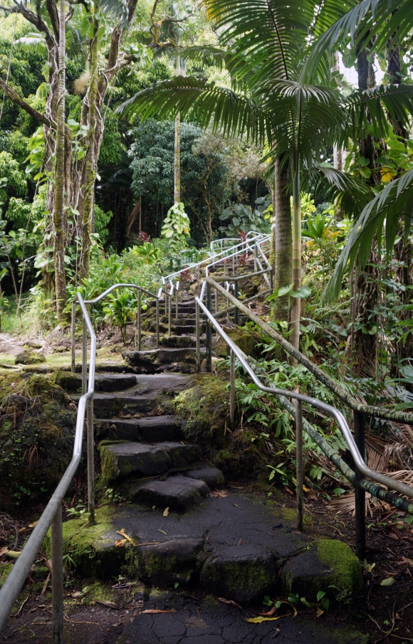 Hawaiian Vacation_Forest Stairs
