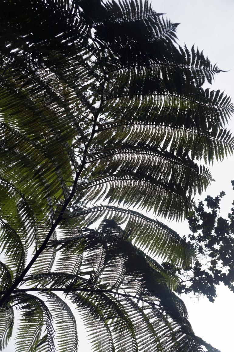 Hawaiian Vacation_Sunburst ferns