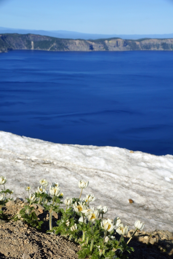 Crater Lake_Flowers Snow and Lake
