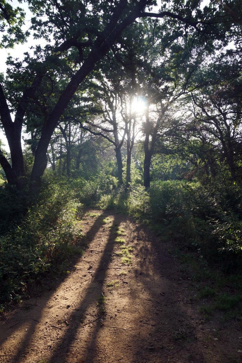 Elmer W Oliver Nature Park_Trail