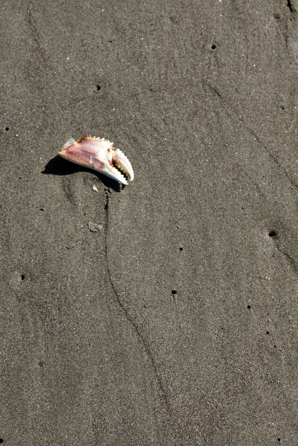 Coast Life_Crab Claw