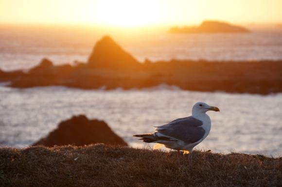 Coast Life_Seagull