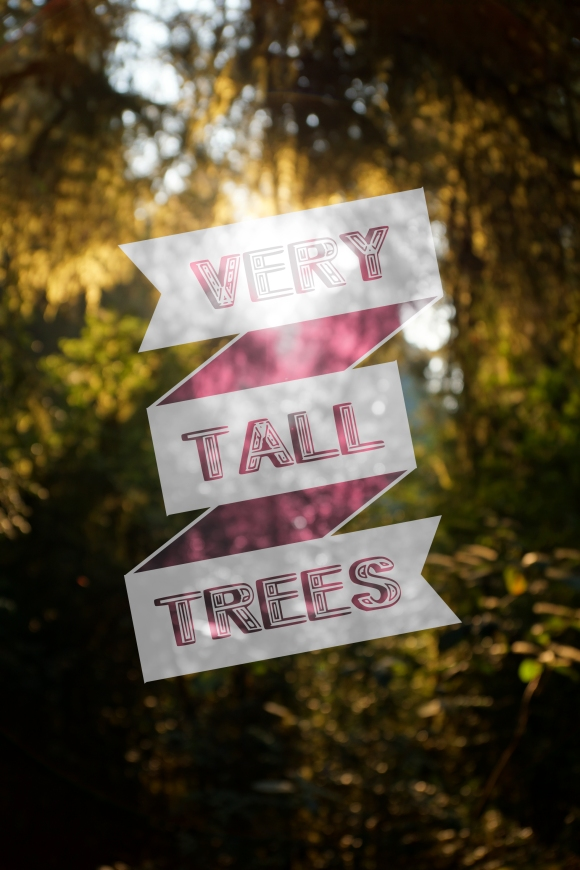 vERY tALL tREES_COVER