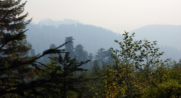 vERY tALL tREES_Smoggy Day
